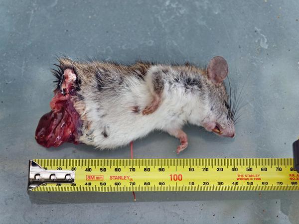 Mouse-1.jpeg