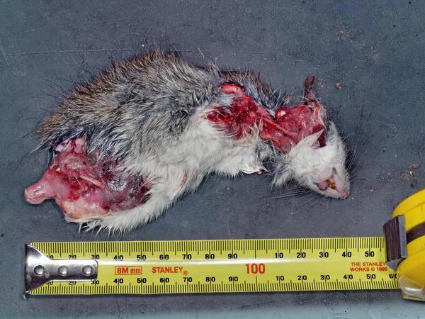 Rodent-5.jpeg