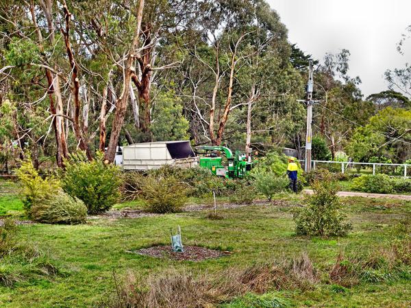 Tree-removal-3.jpeg