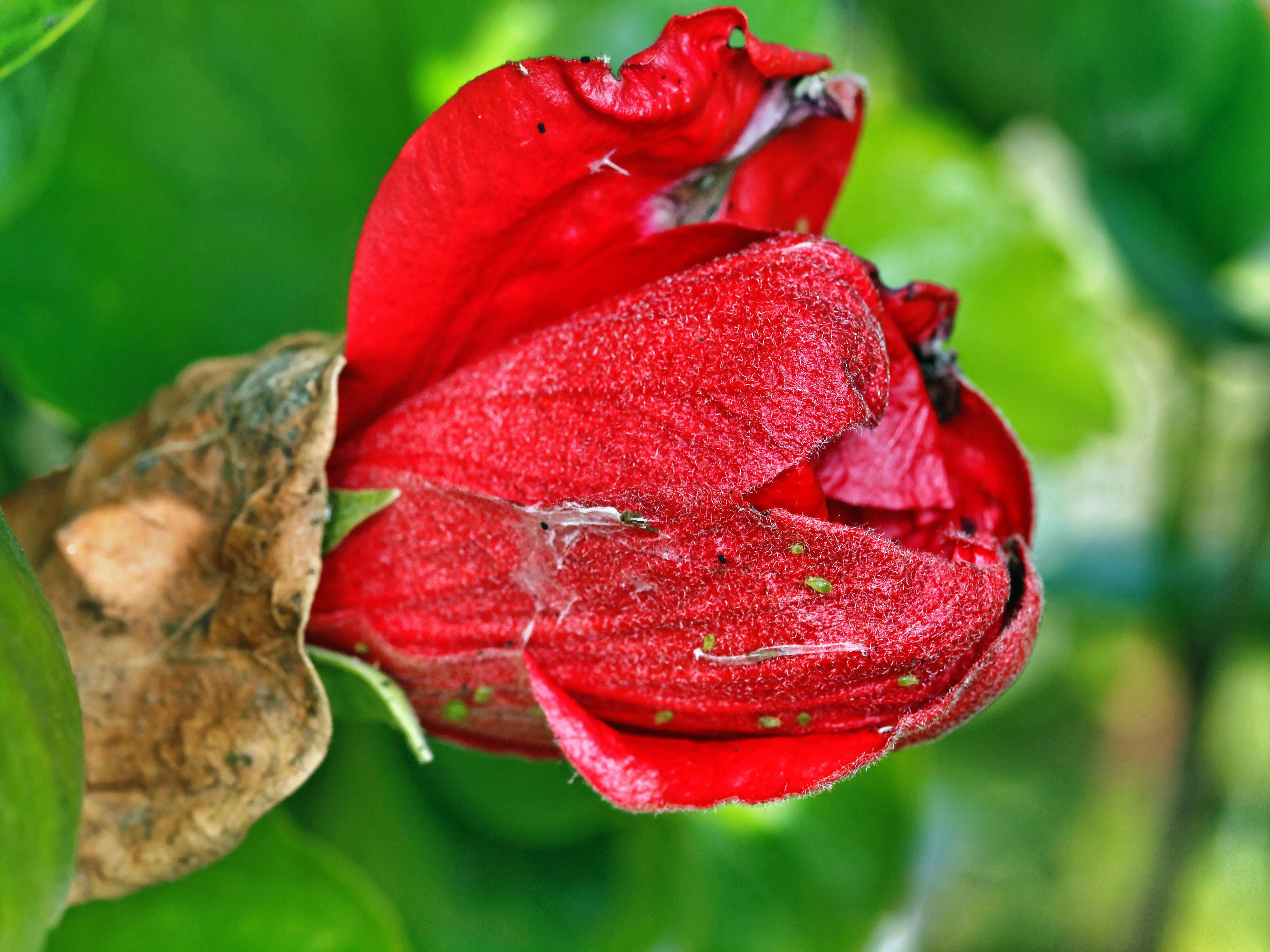 Hibiscus.jpeg