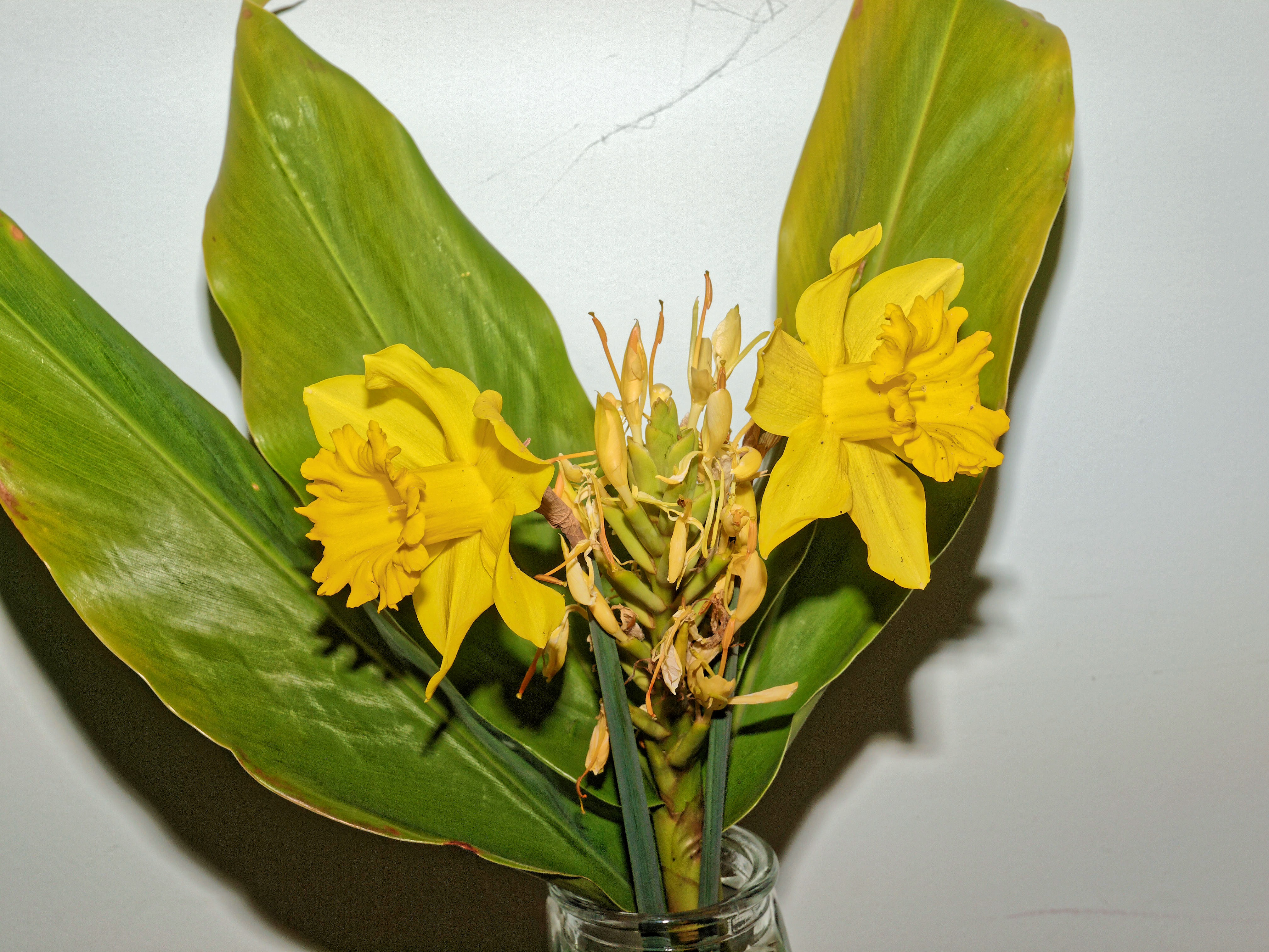 Daffodils-and-Hedychium-2.jpeg