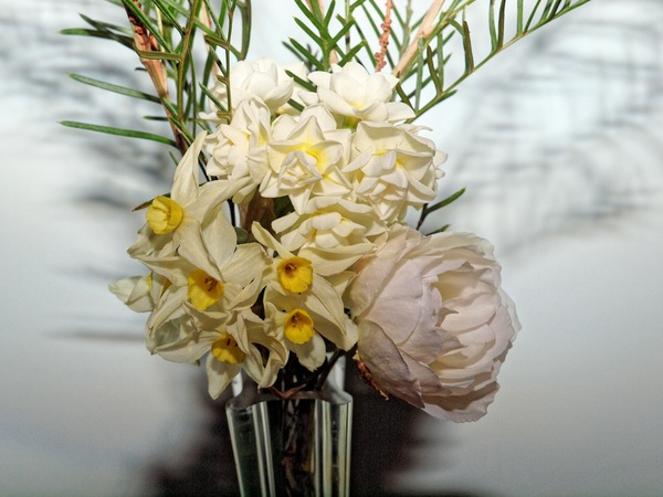 Jonquils-rose-grevillea-2.jpeg