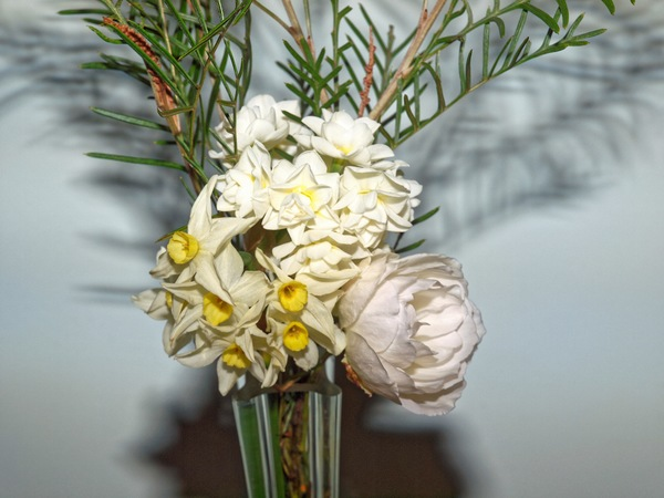 Jonquils-rose-grevillea-3.jpeg