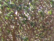 Garden-Canon-1-detail.jpeg