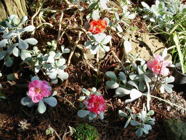 Succulent-flowers-1.jpeg
