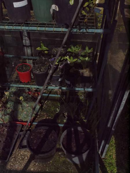 greenhouse-before-6-orig.jpeg
