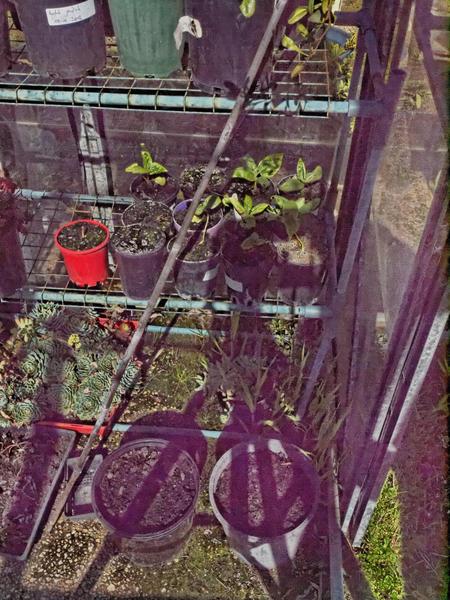 greenhouse-before-6.jpeg