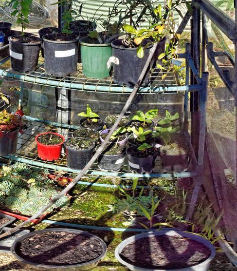 greenhouse-before-detail.jpeg