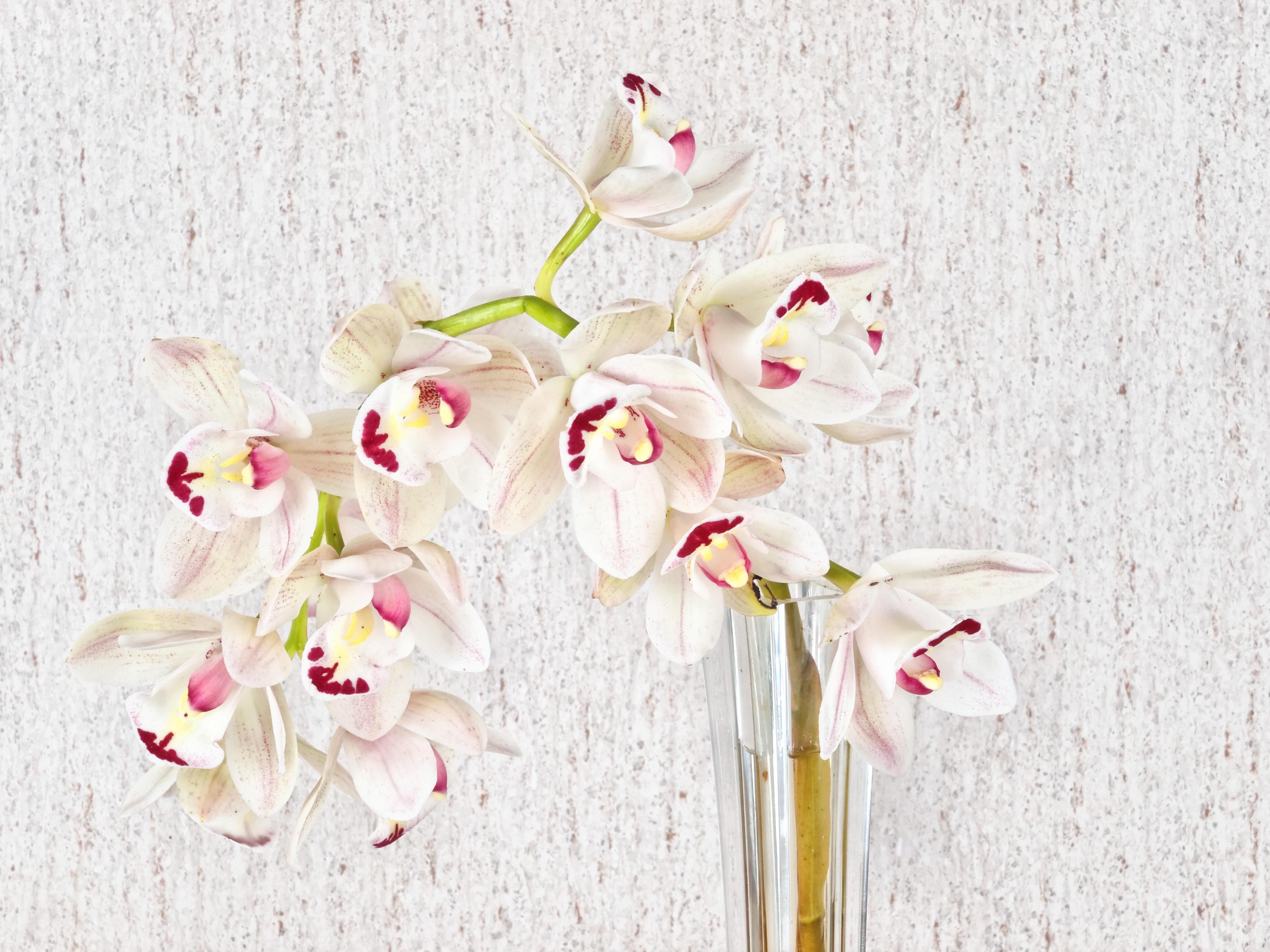 Orchid-2.jpeg