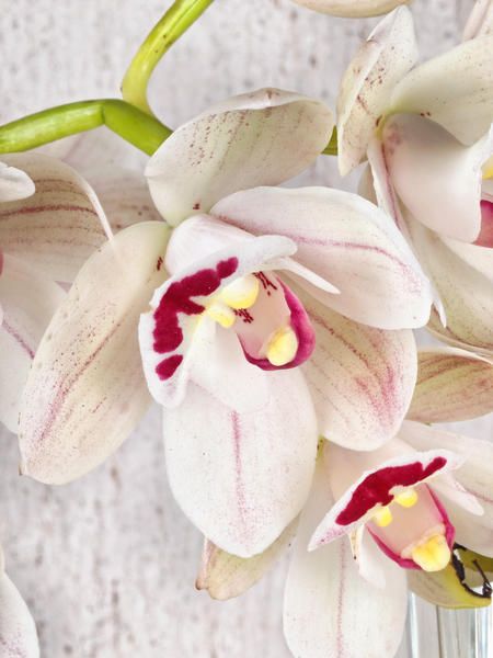 Orchid-4.jpeg