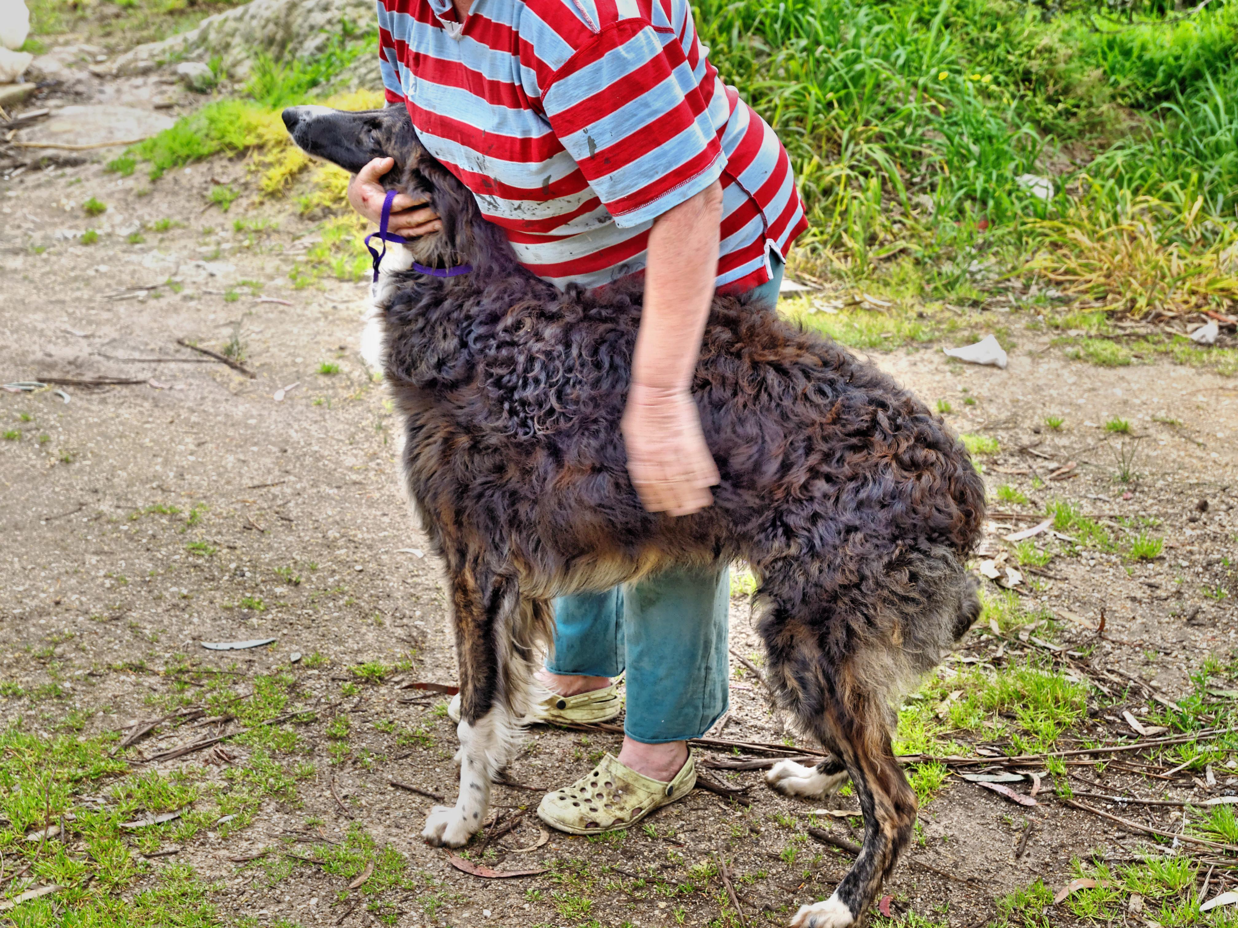 Dogs-36.jpeg