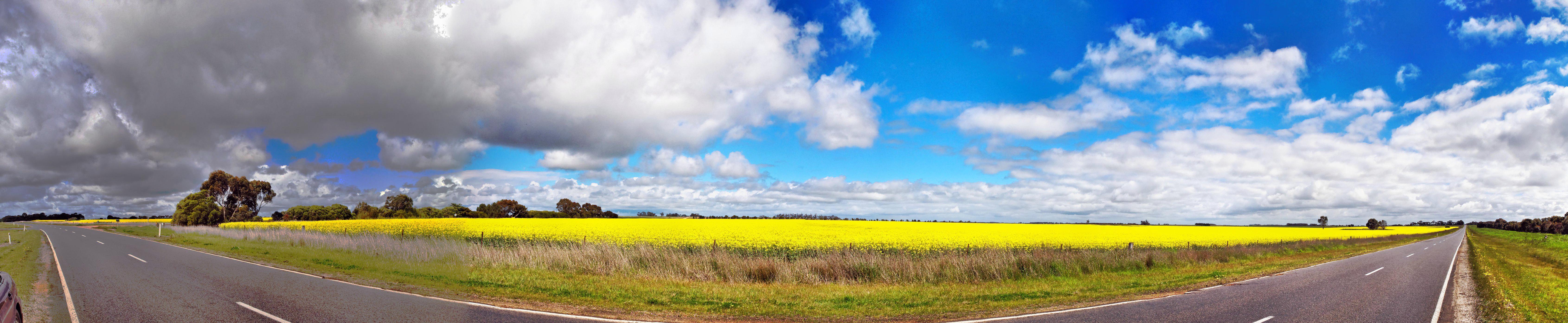 Golden-Plains.jpeg