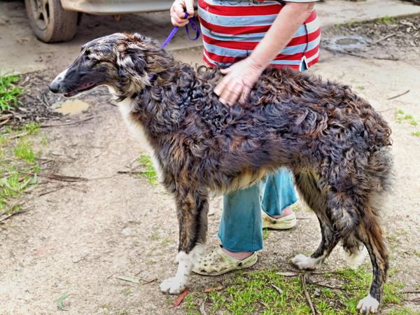 Dogs-41.jpeg