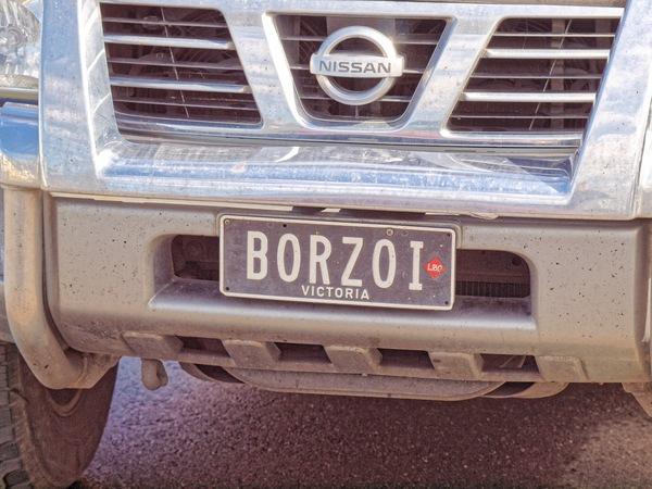 Borzoi-championship-7.jpeg