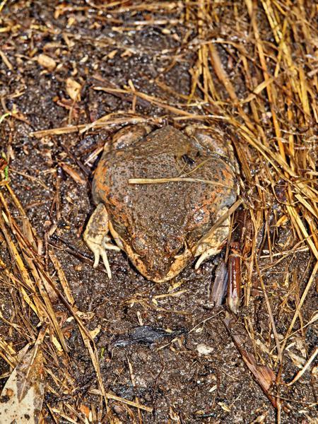 Frog-4.jpeg