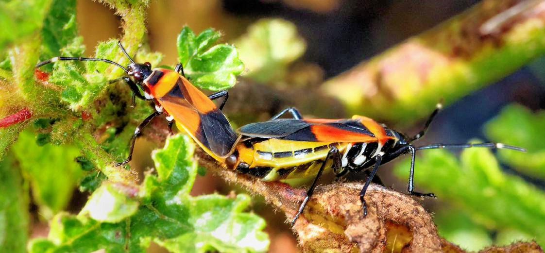 Beetles-8-detail.jpeg