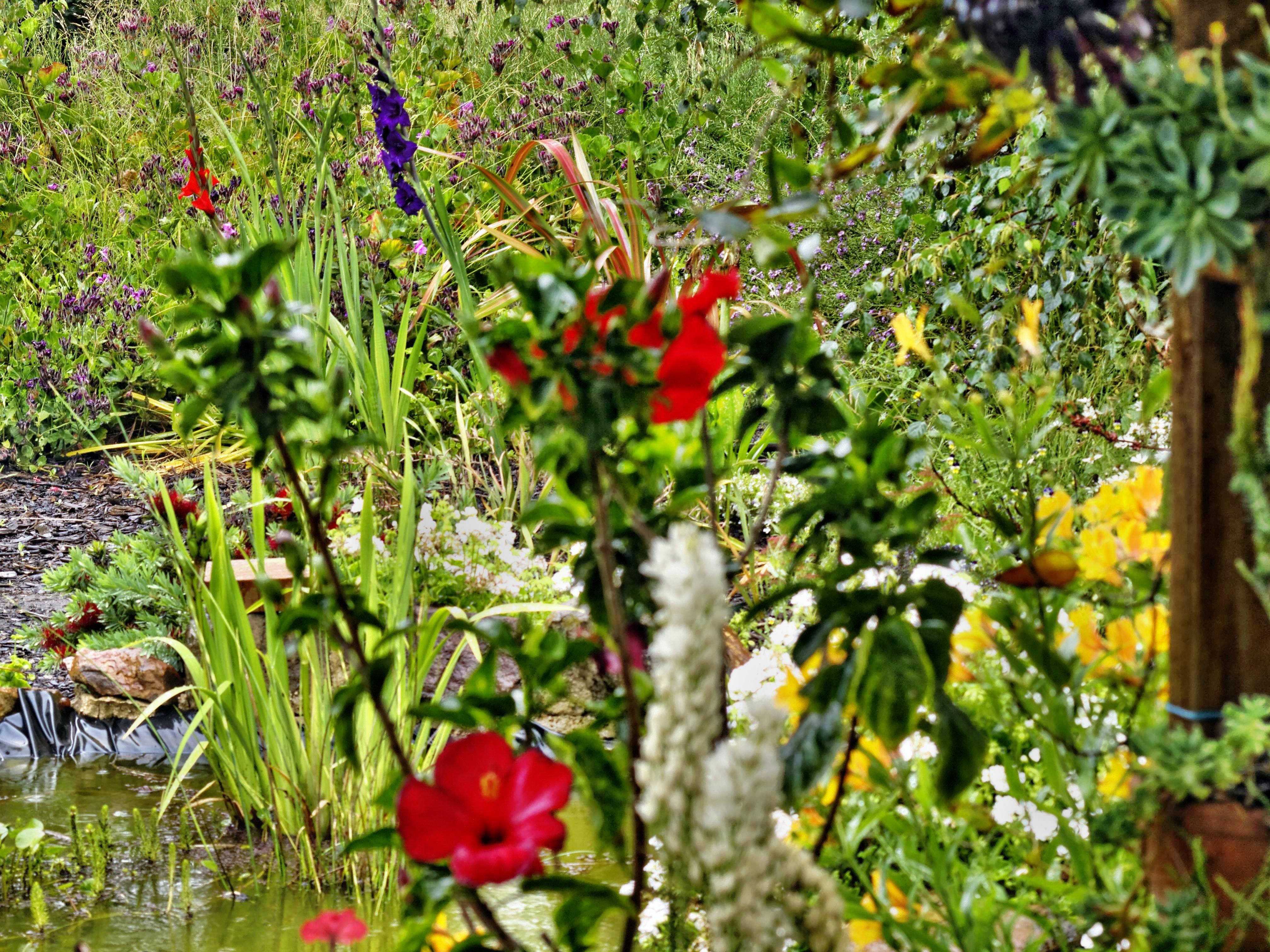 Garden-flowers-2.jpeg