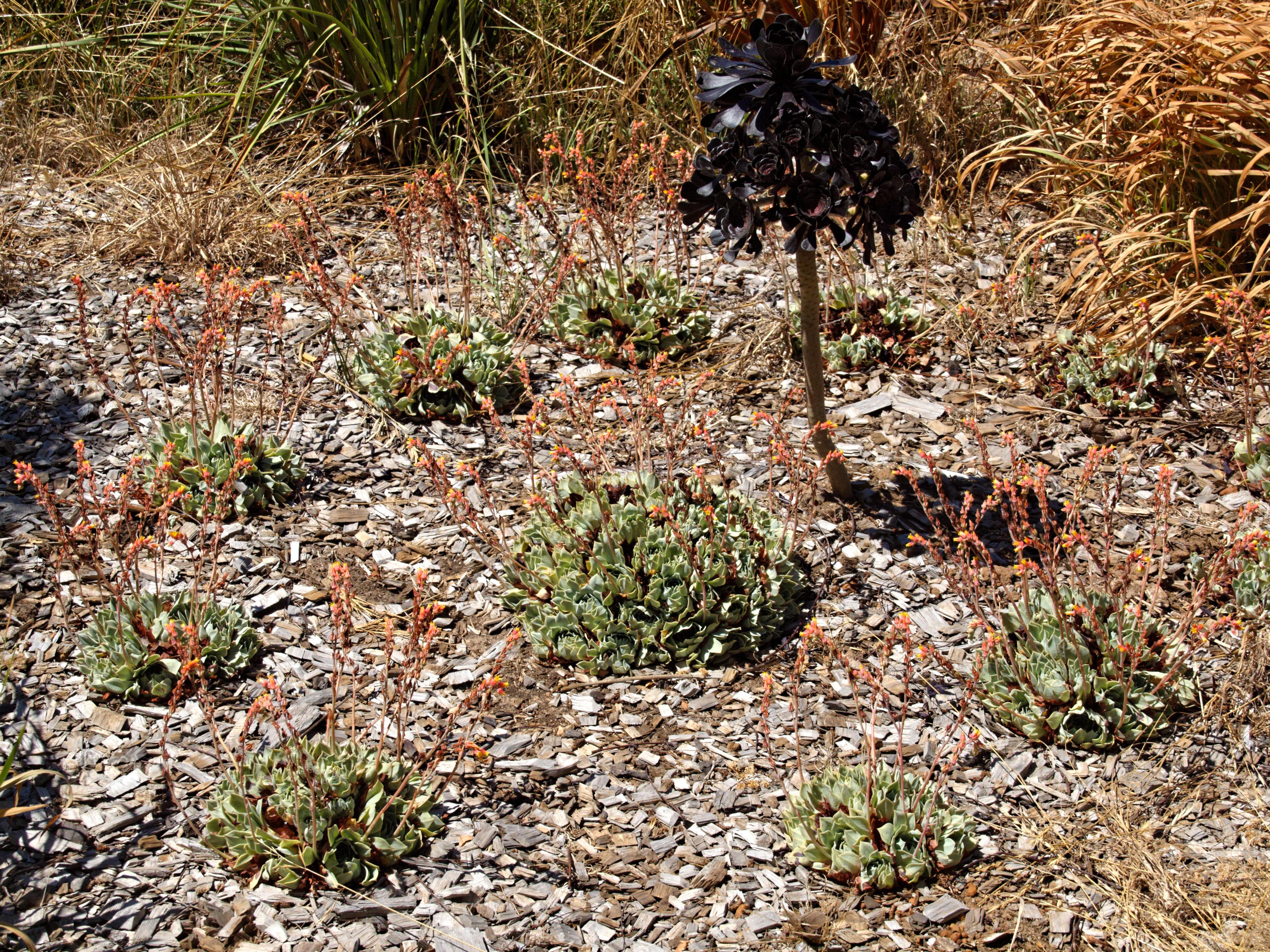 Succulent-4.jpeg