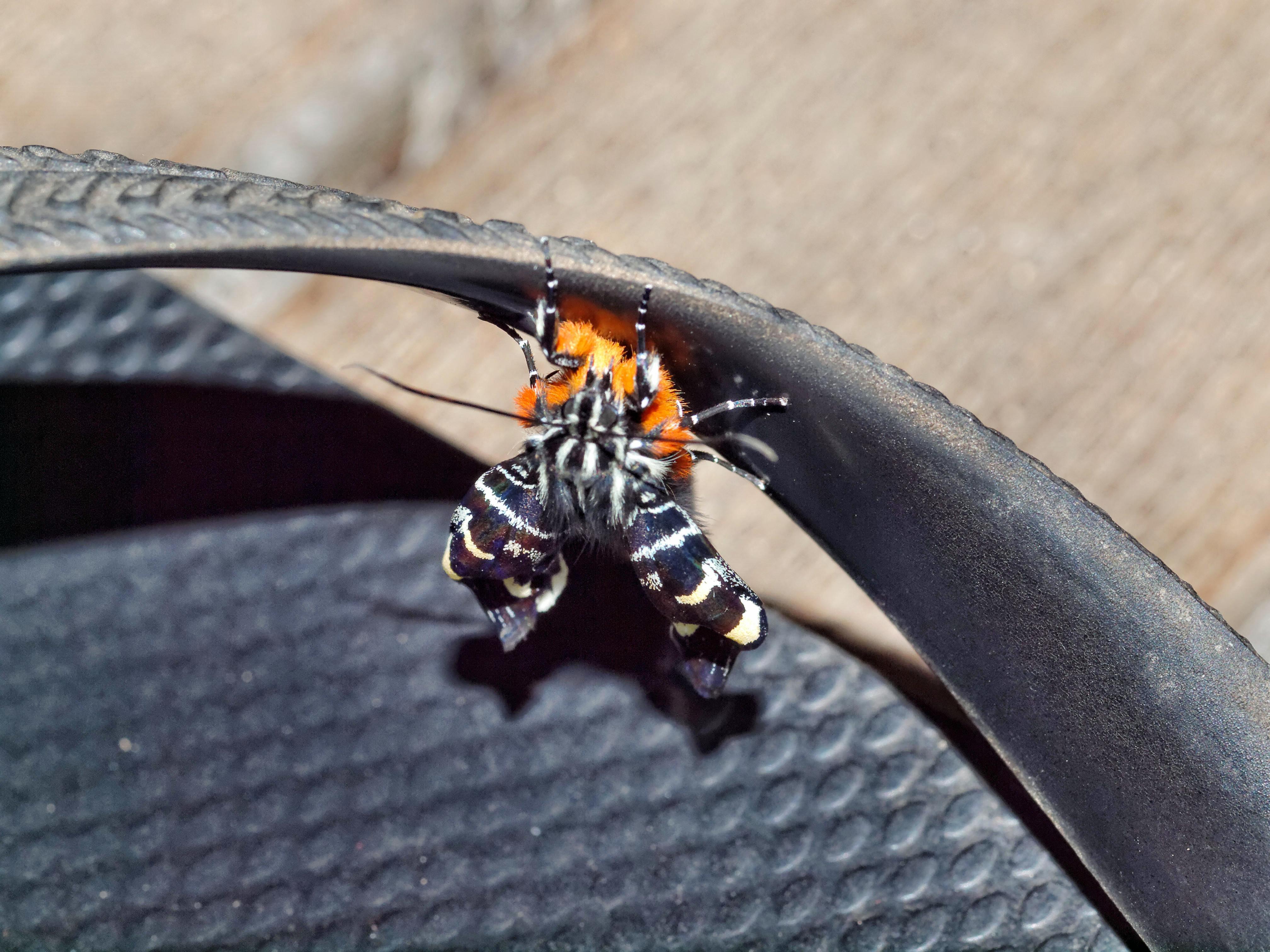 Butterfly-3.jpeg