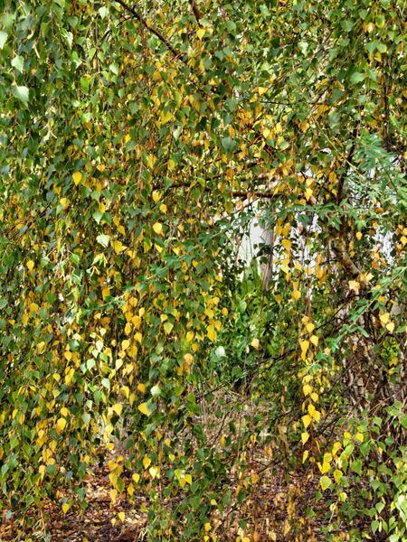 Autumn-leaves.jpeg