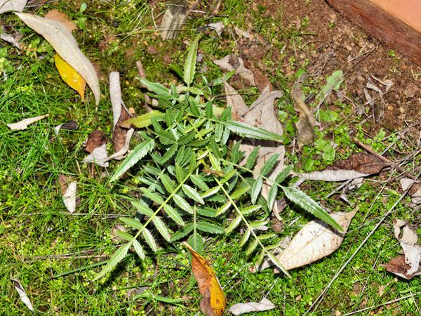 Mystery-plant.jpeg