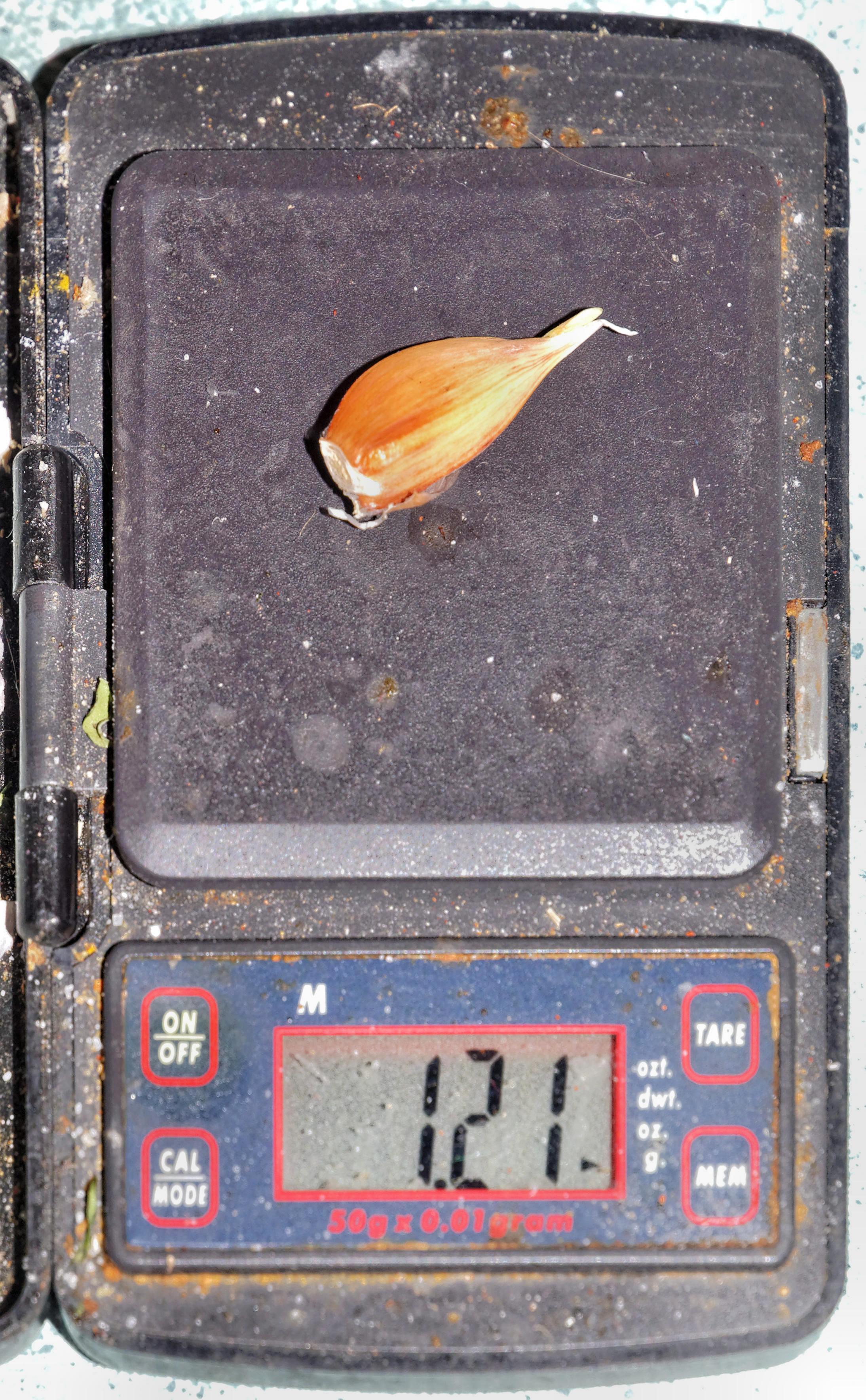 Garlic-2.jpeg