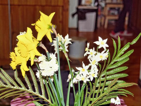 Narcissus-4.jpeg