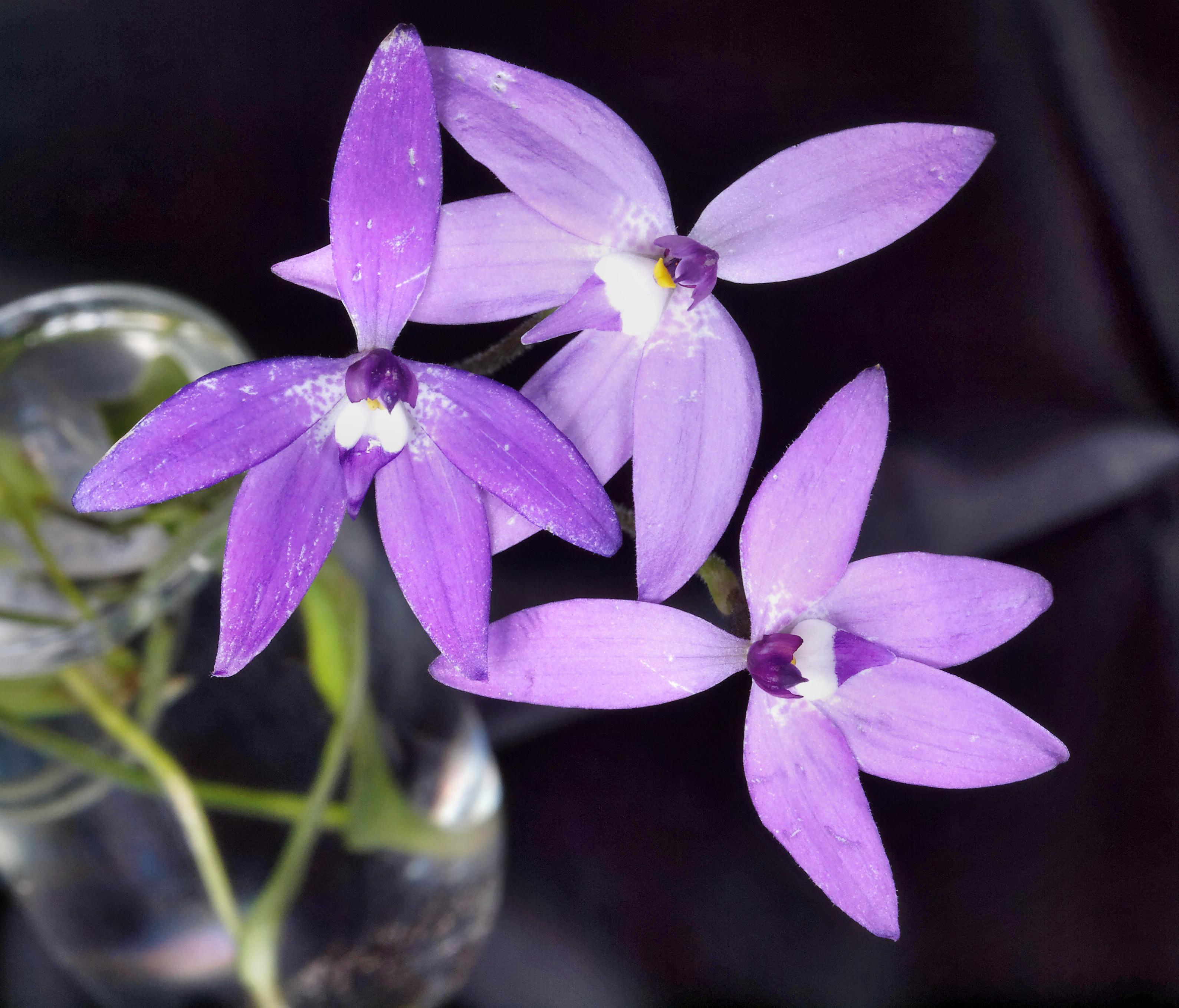 Orchid-5.jpeg