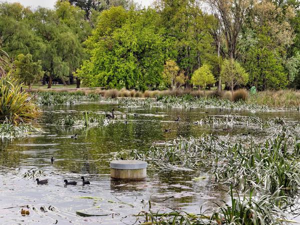 Lake-Wendouree.jpeg