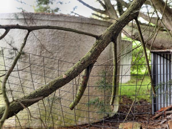 Fallen-branch-7.jpeg