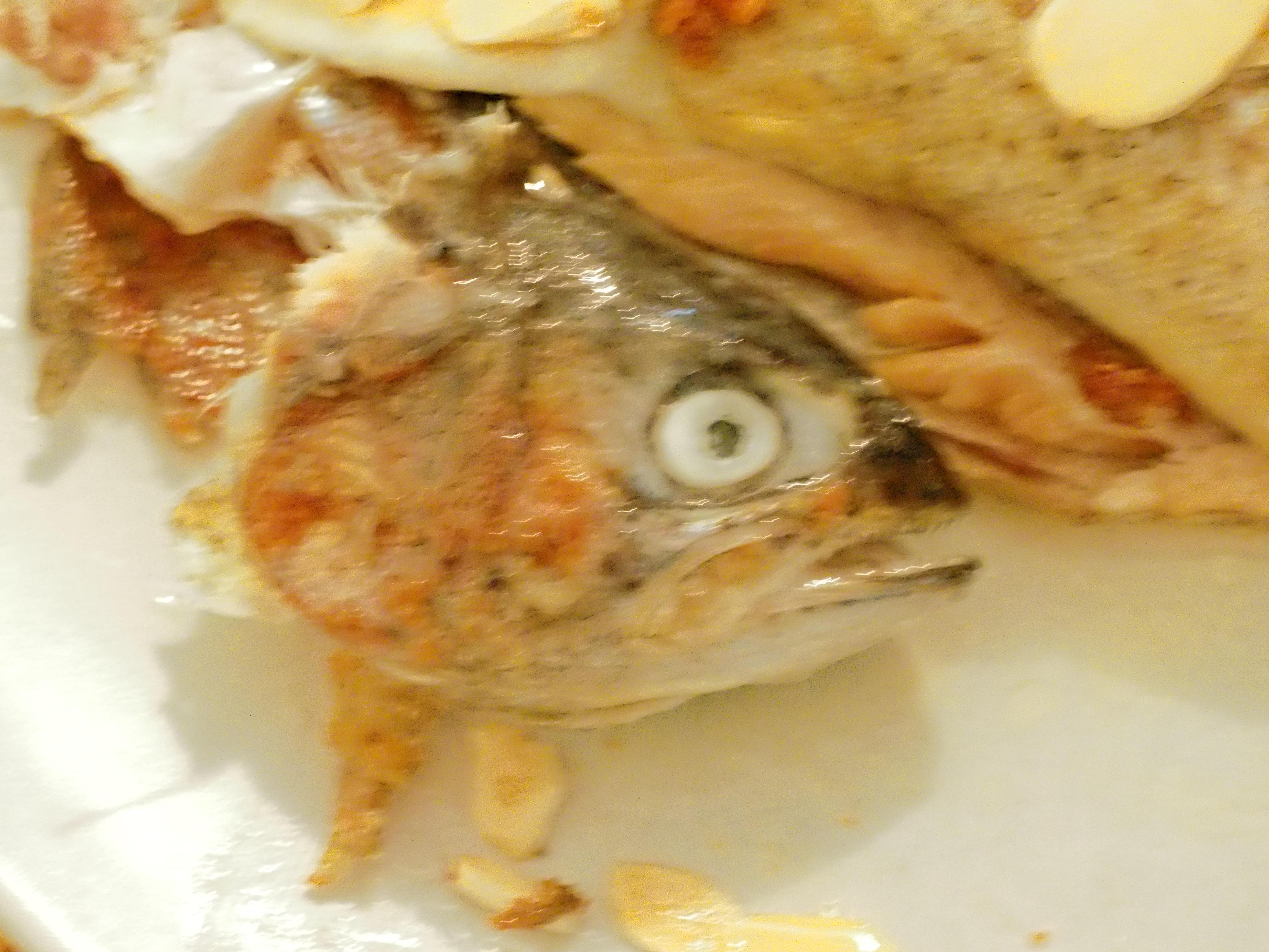 Fish-5.jpeg