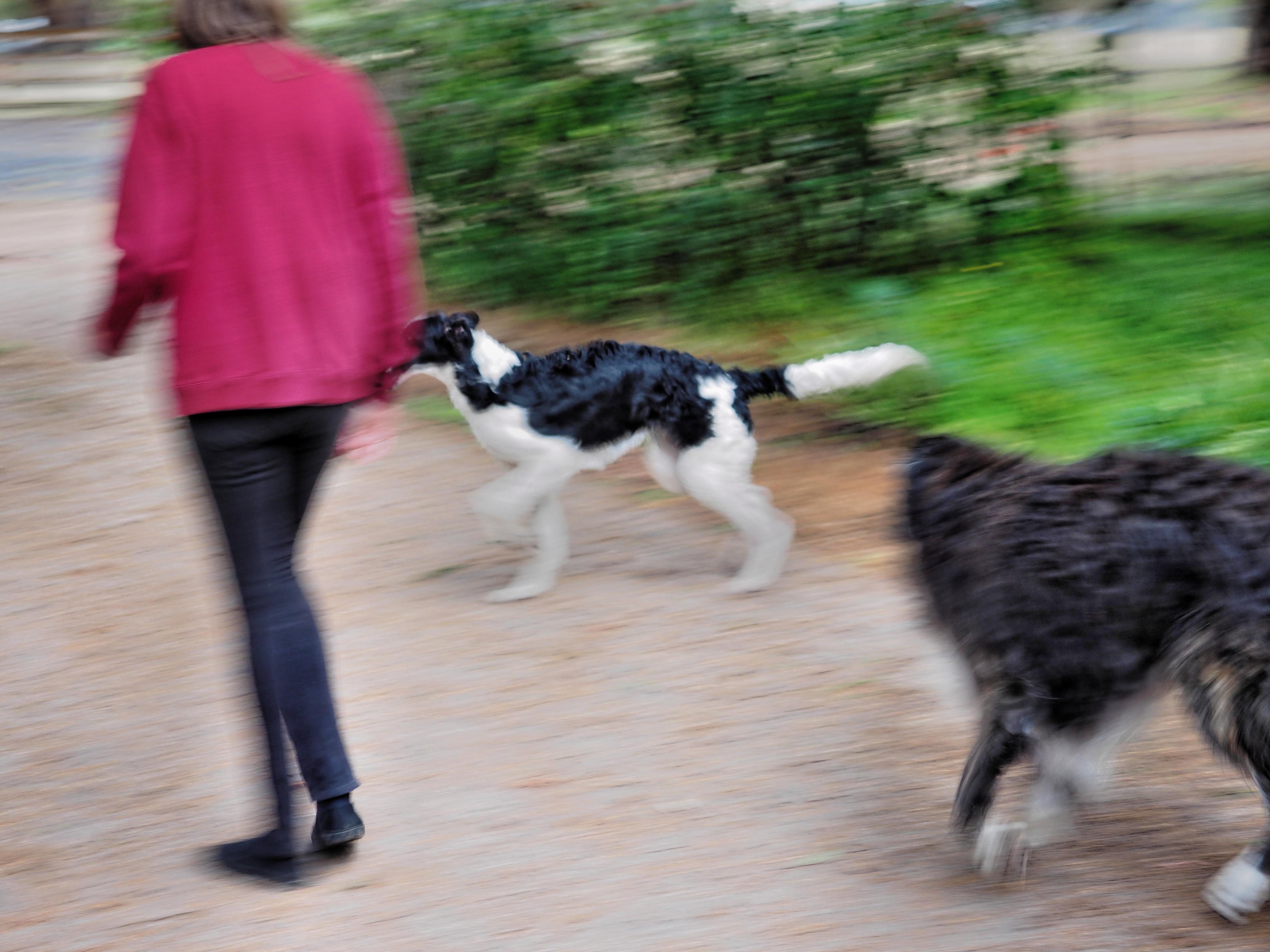Dogs-9.jpeg