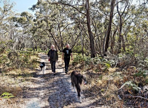 Walking-dogs-29.jpeg