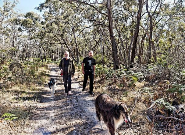 Walking-dogs-30.jpeg