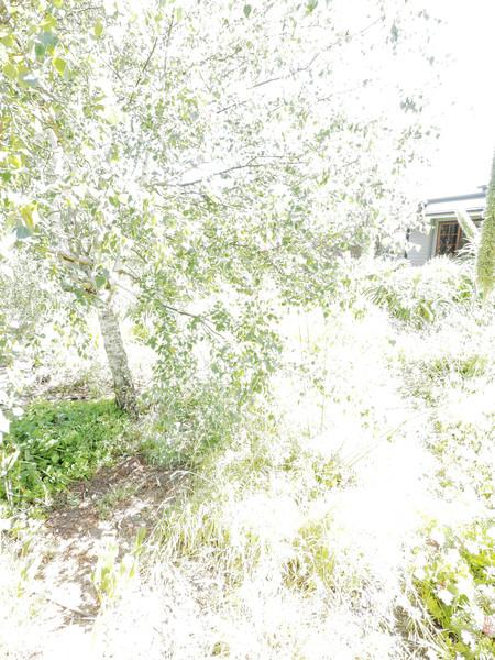 garden-centre-1+4EV.jpeg