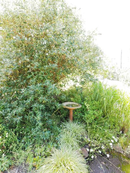 garden-path-centre-3+1EV.jpeg