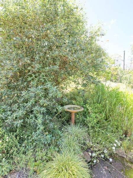 garden-path-centre-3.jpeg