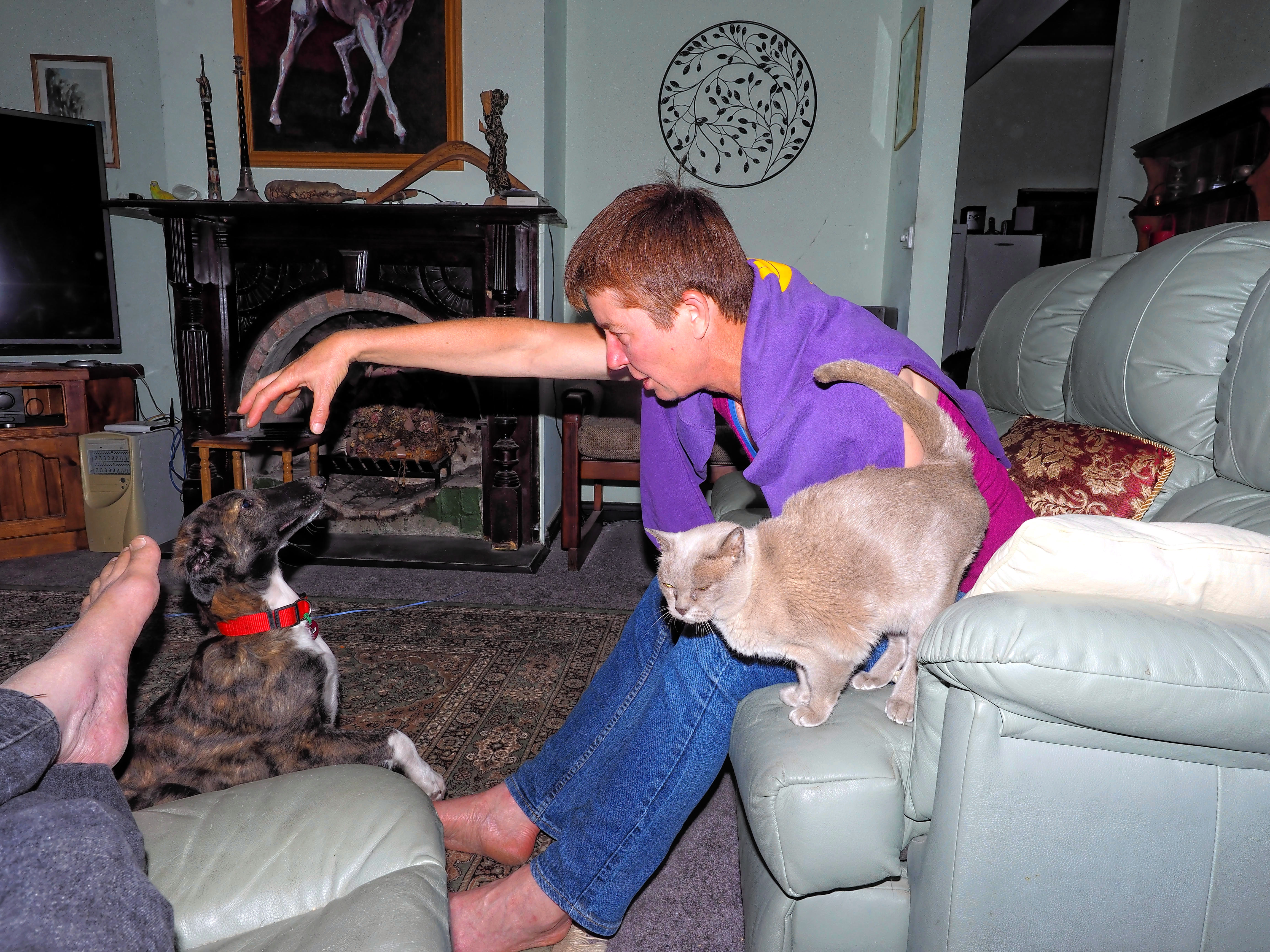 Cats-and-dogs-3.jpeg