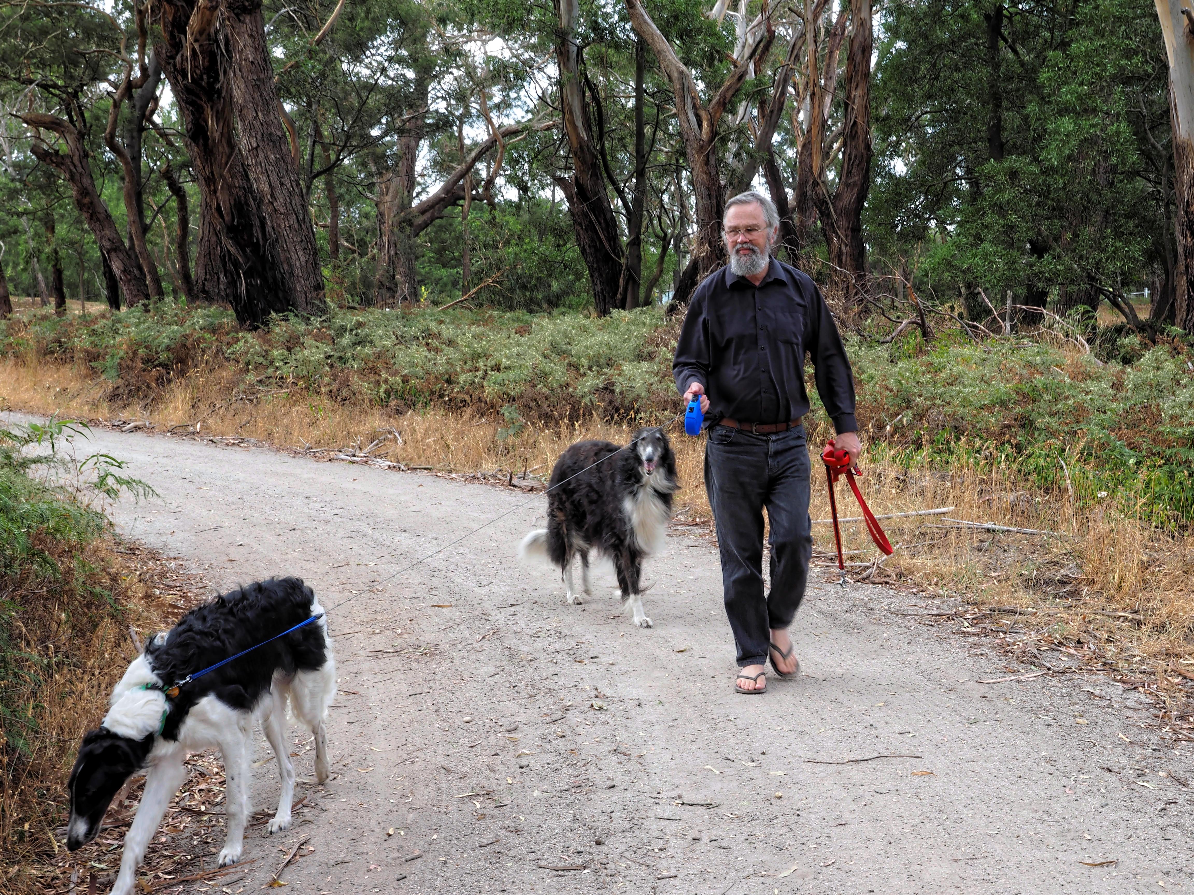 Walking-dogs-11.jpeg