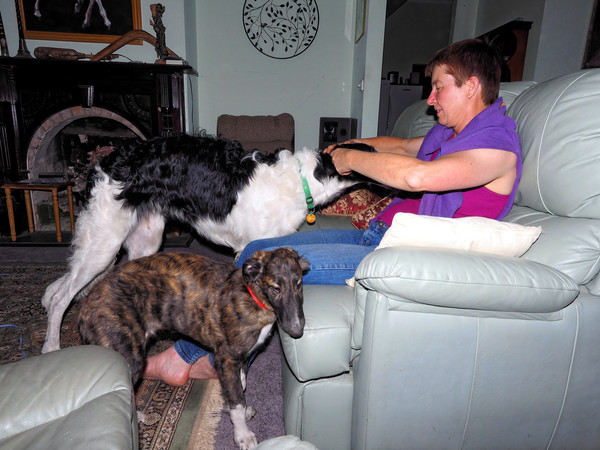 Cats-and-dogs-12.jpeg