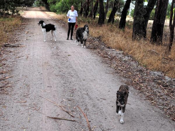 Walking-dogs-0.jpeg