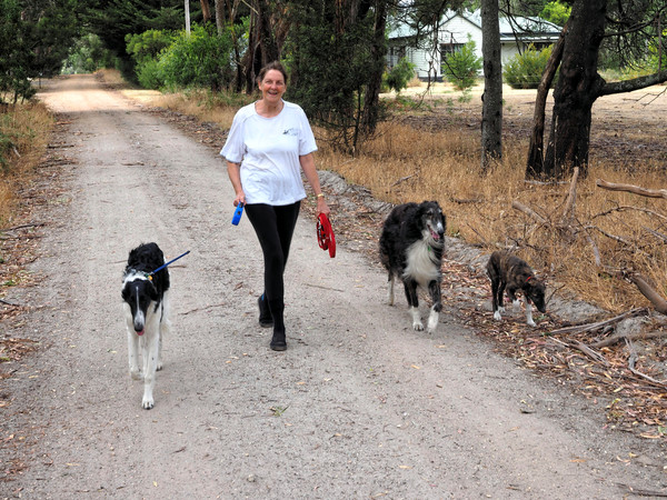 Walking-dogs-5.jpeg