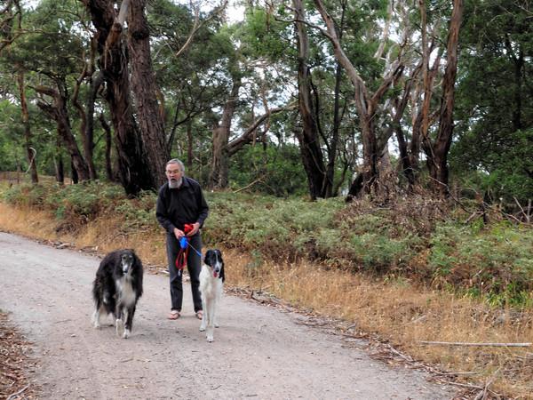 Walking-dogs-8.jpeg