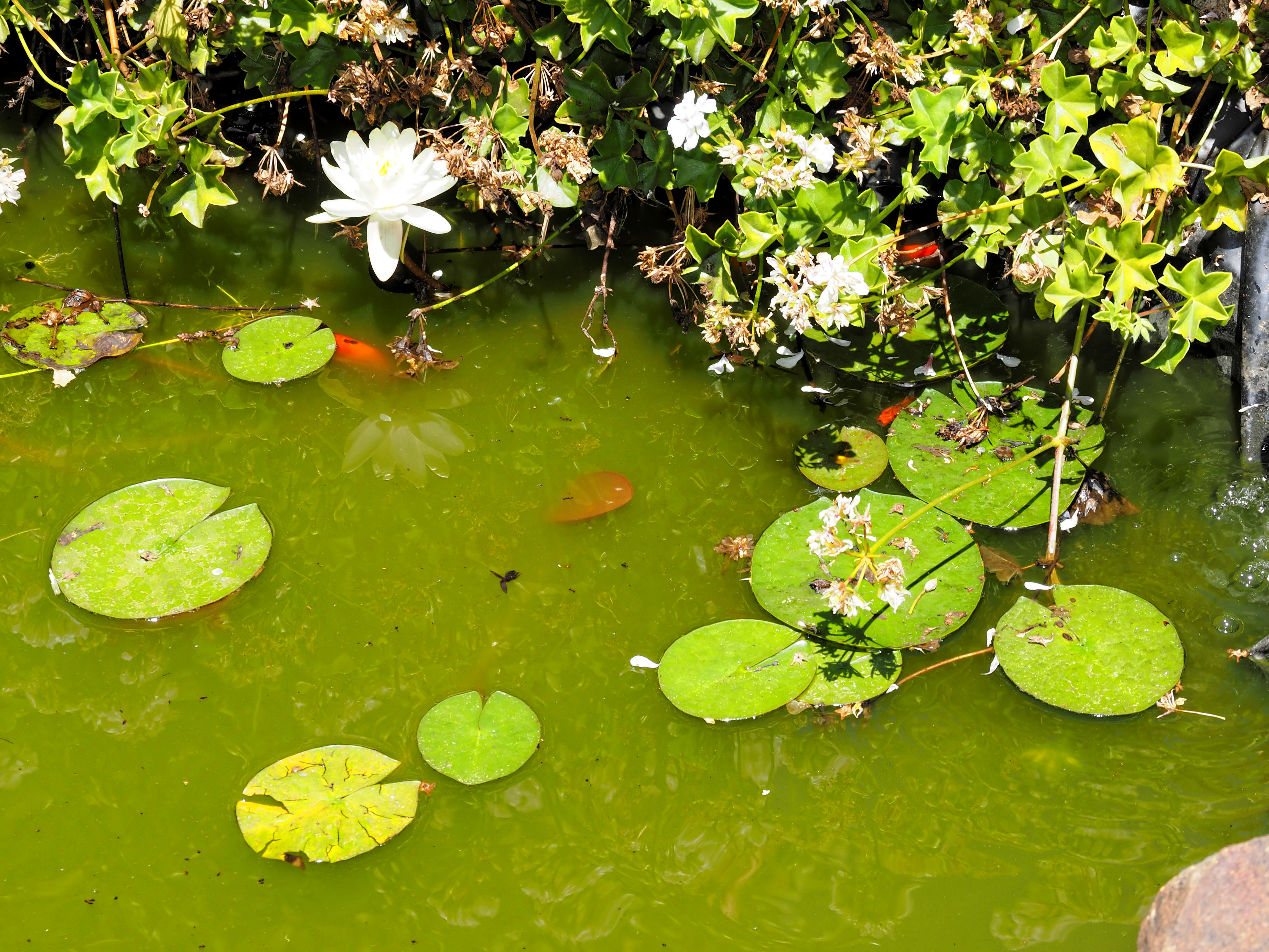 Pond-2.jpeg