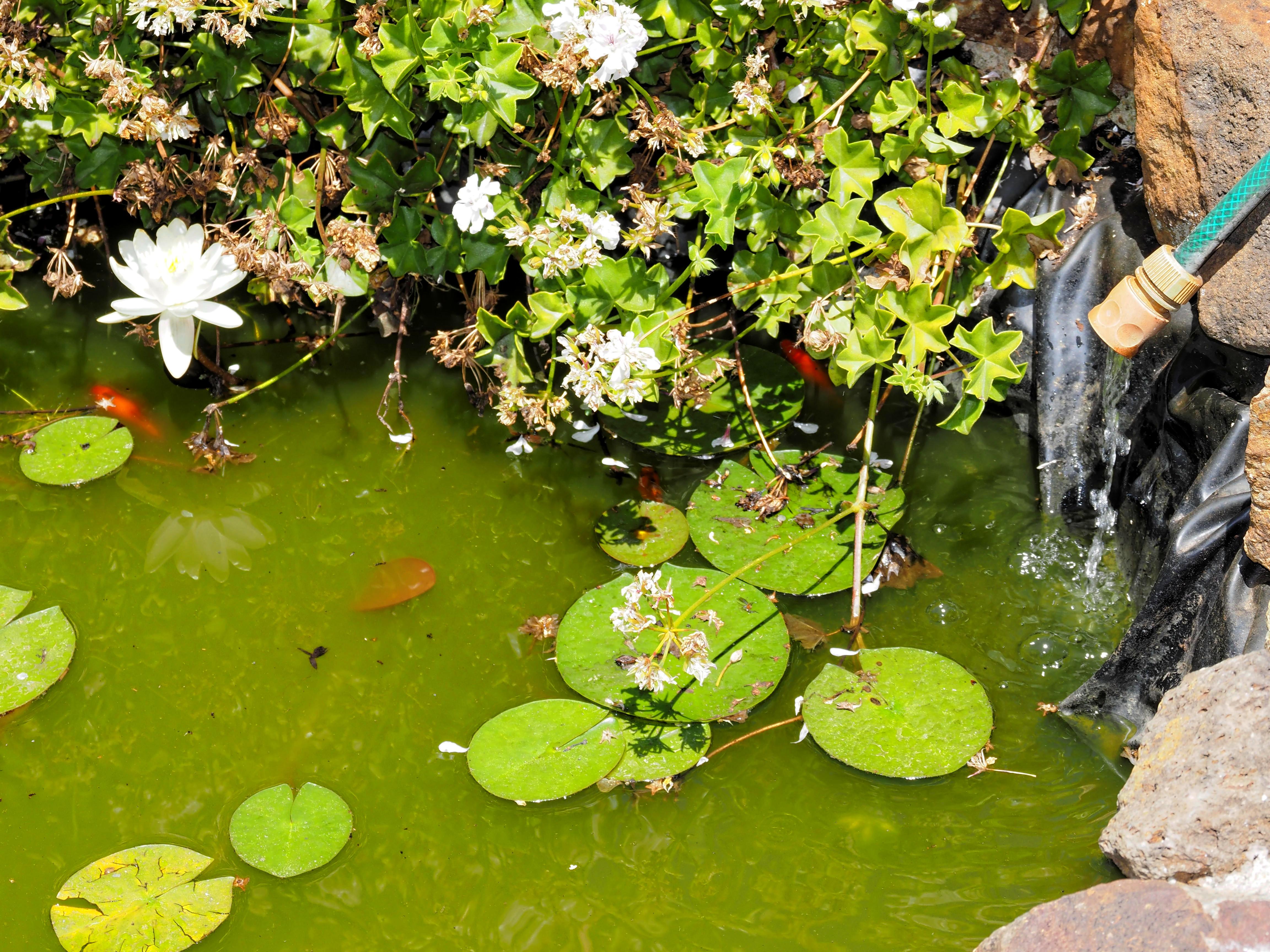 Pond-3.jpeg