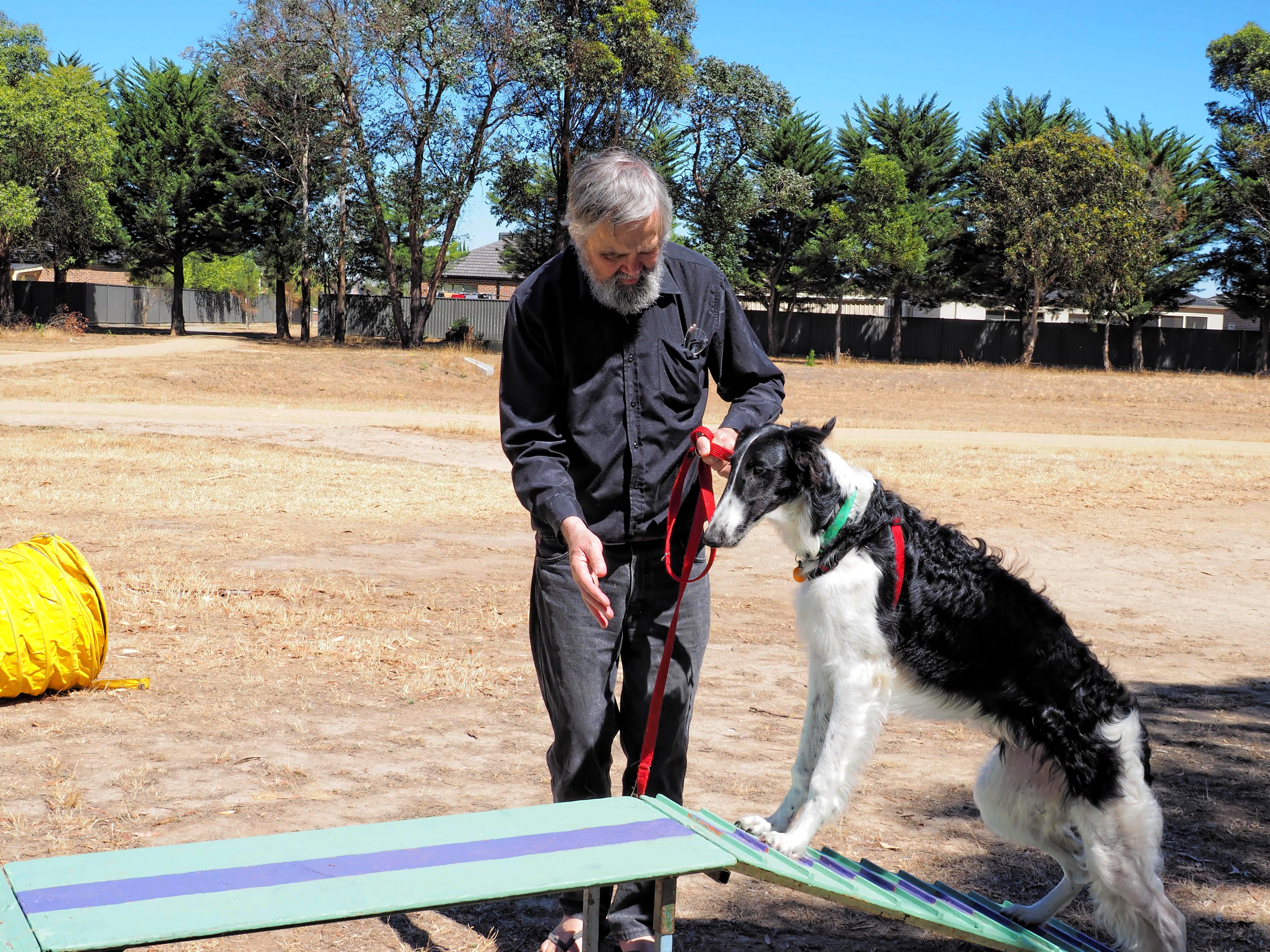 Dog-training-10.jpeg