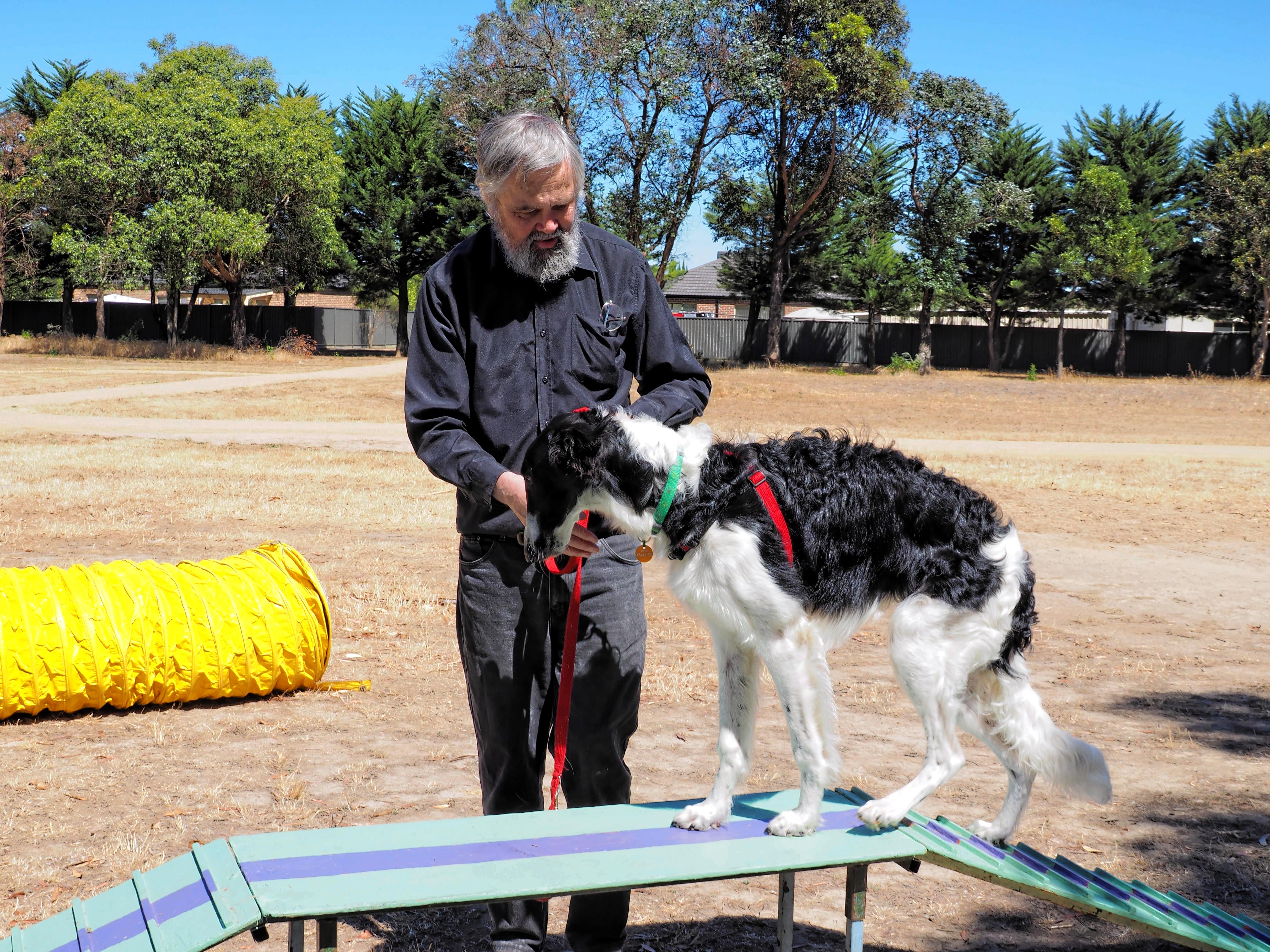 Dog-training-14.jpeg