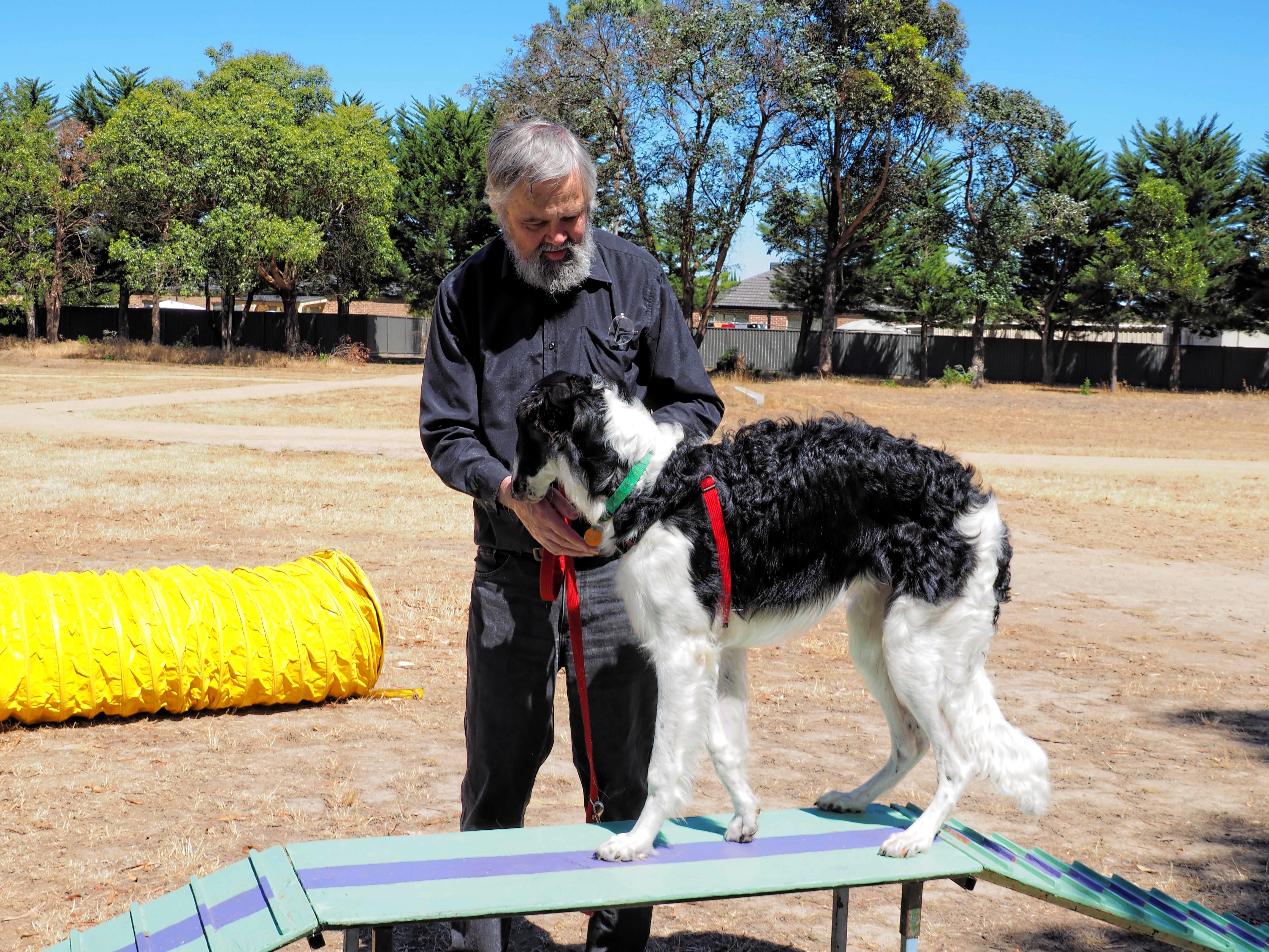 Dog-training-15.jpeg