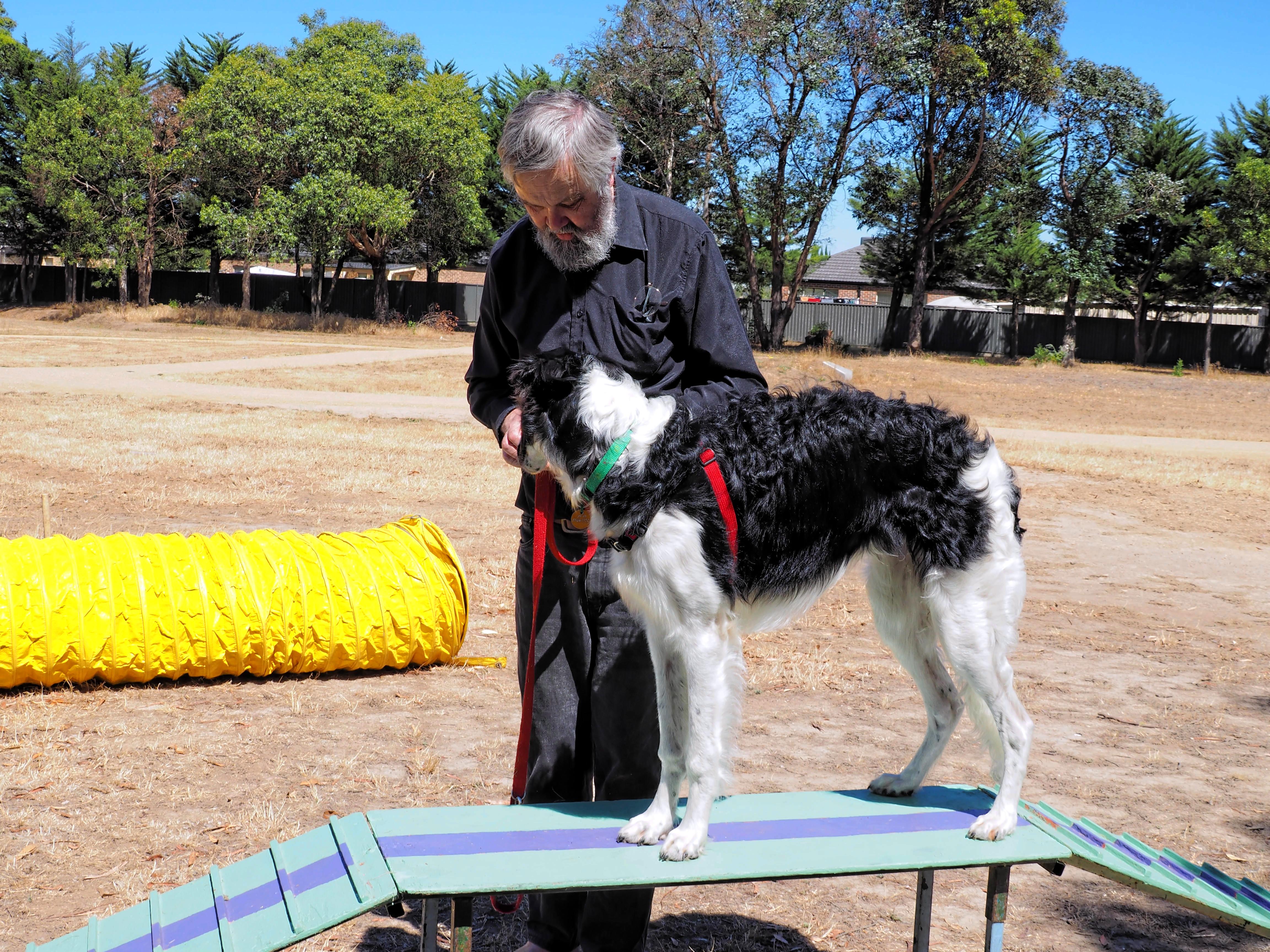 Dog-training-17.jpeg