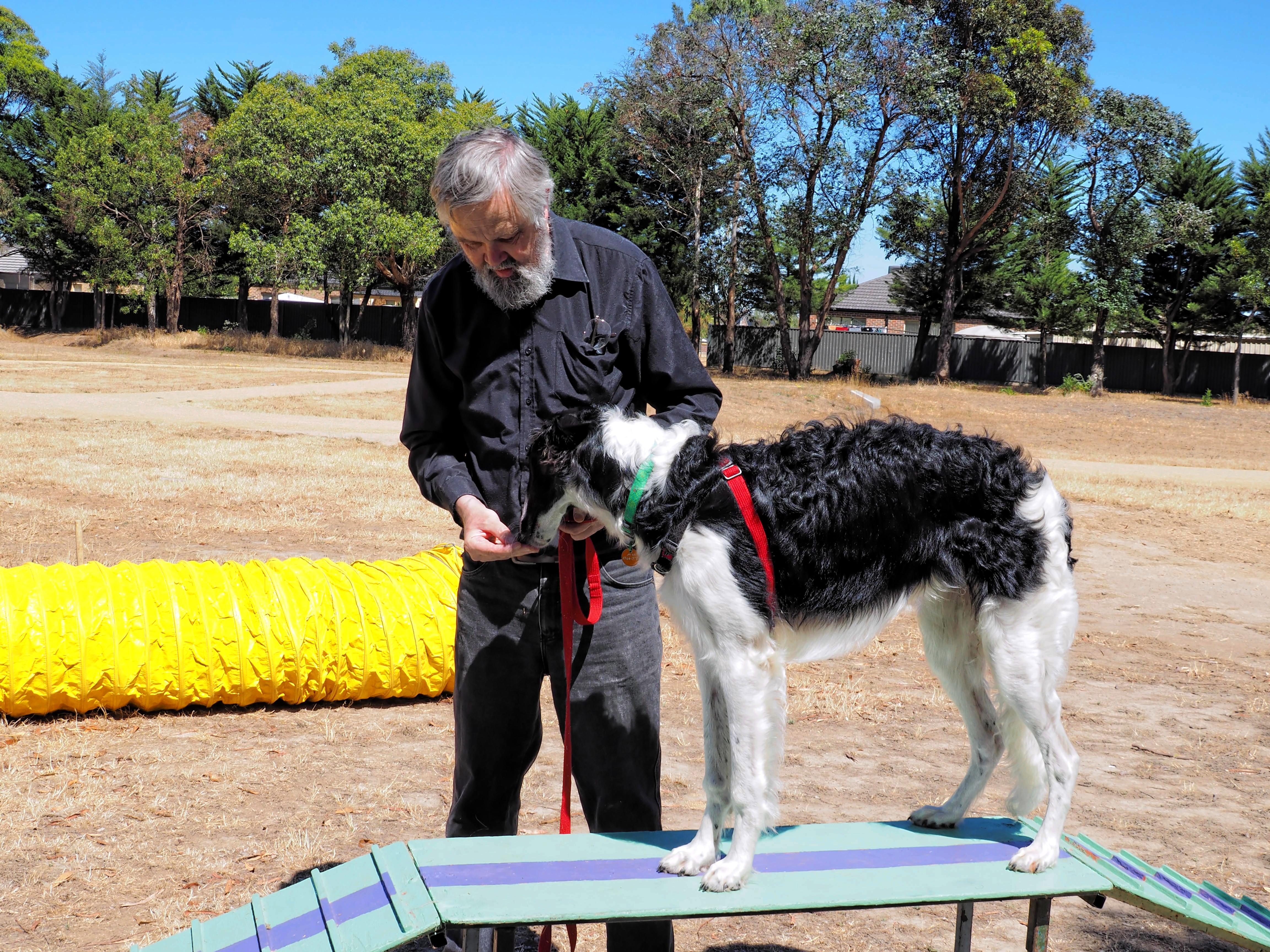 Dog-training-18.jpeg